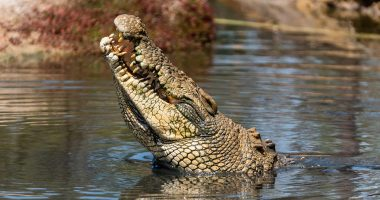 See, hold, eat and learn all about Crocodiles at Koorana Crocodile Farm - Empire Rockhampton